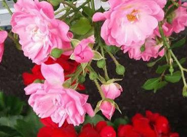 Papinsaaren Kukka palvelee jälleen